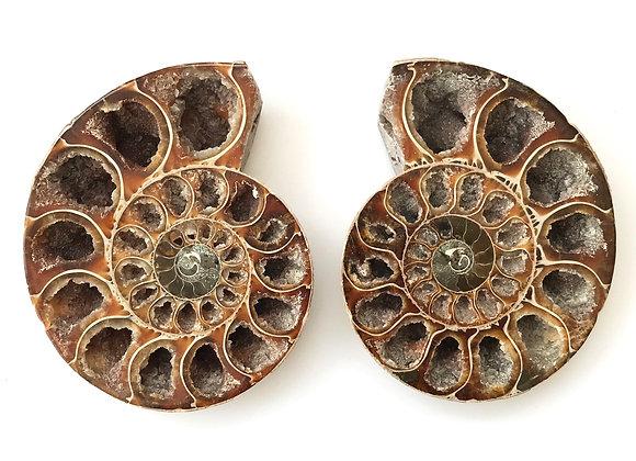 Cut Ammonite Pair 'Desmoceras'