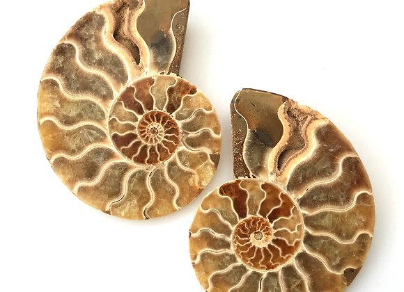 Ammonite Cut Pair 'Cleoniceras'