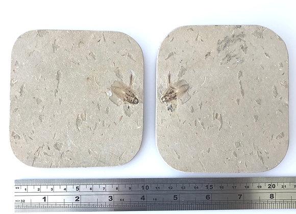 Insect Poss/Neg