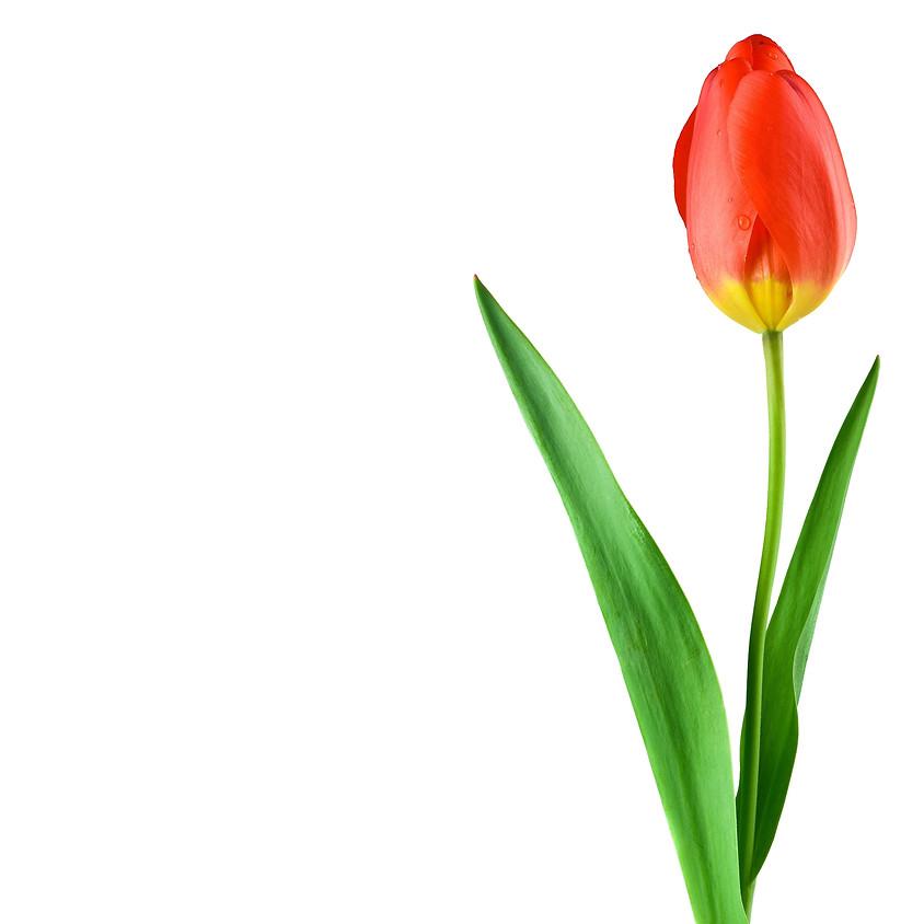 Second Annual Tulip Festival