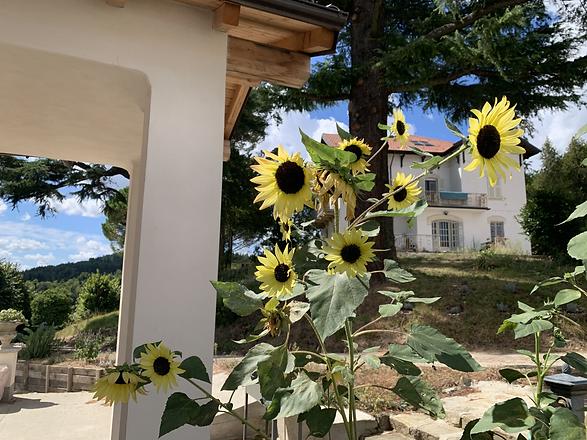 Villa mit Sonnenblumen.heic
