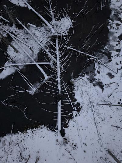 Taavid Meedia aerofoto droonifoto puu 1.