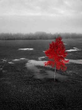 Taavid Meedia aerofoto droonifoto punane