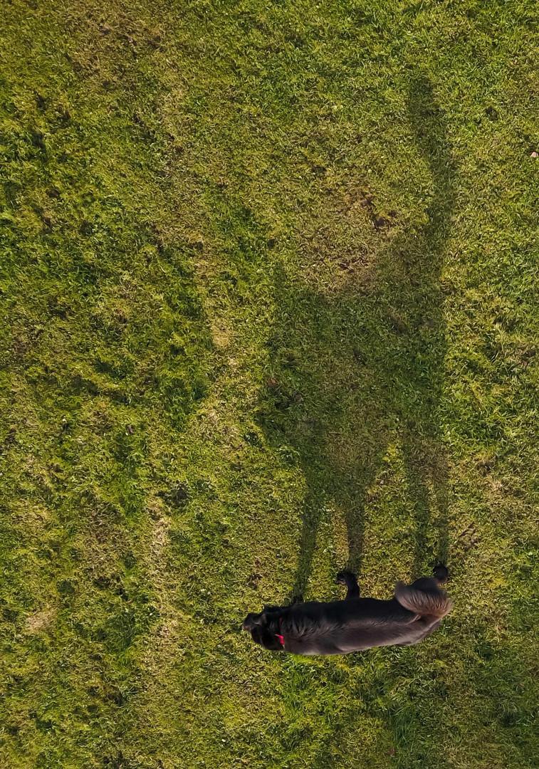 Taavid Meedia aerofoto droonifoto koer.j