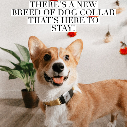 There's a new breed of dog collar