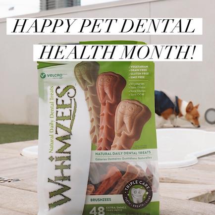 Happy Pet Dental Health Month!