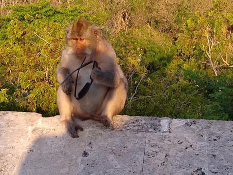Au marché des primates
