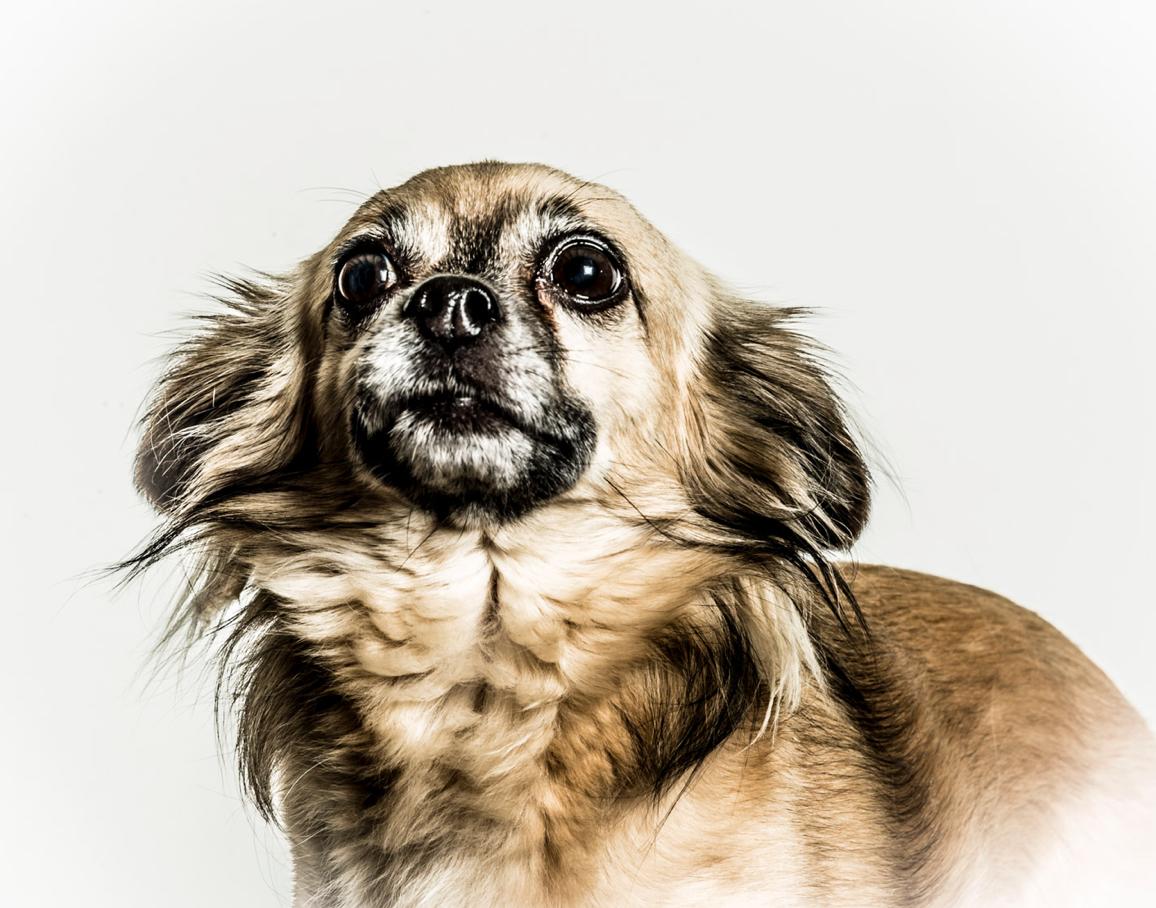 Foto van hond