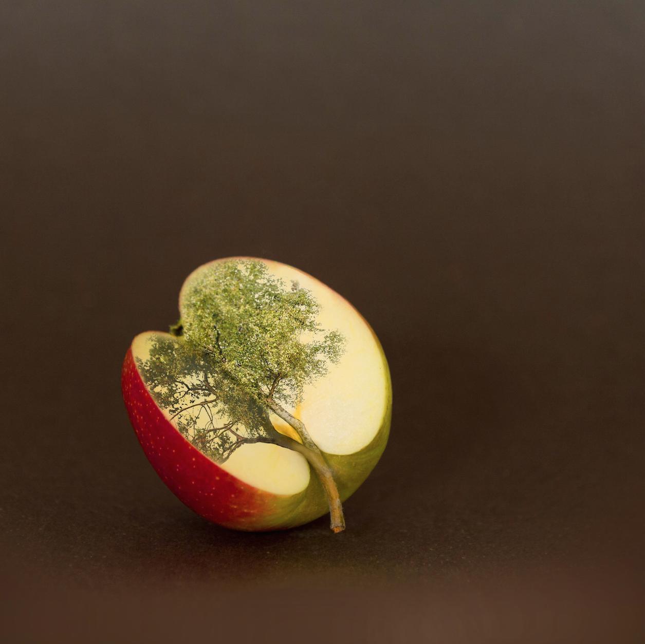 De appel valt niet ver van de boom.
