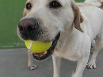 perro+pelota.jpg