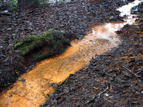 The revival of soil - Water and life around it