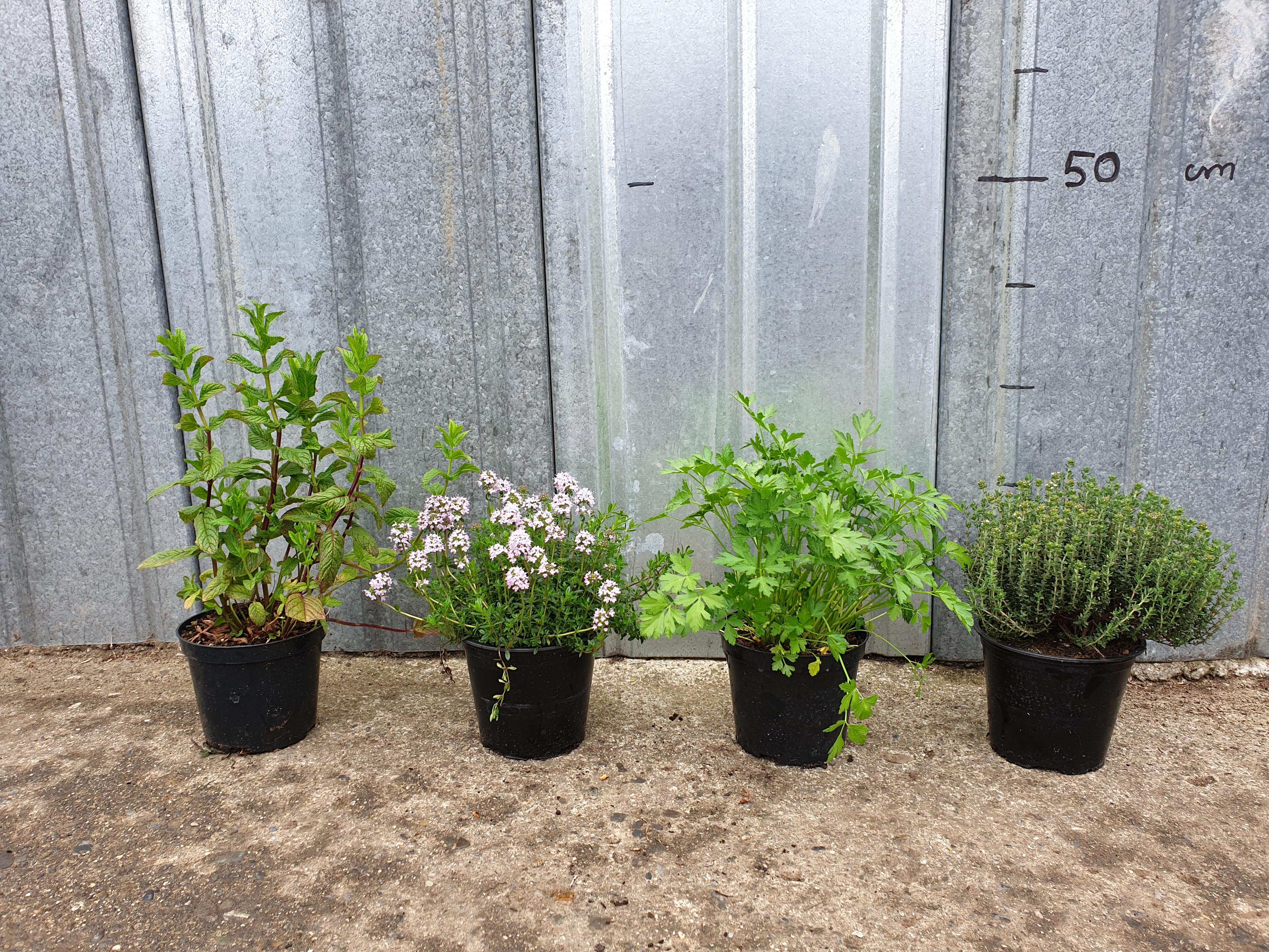 Plantes aromatiques 1 litre