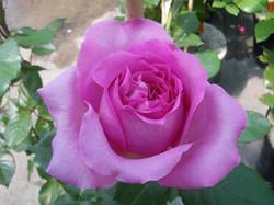 Rose Bernadette Lafont