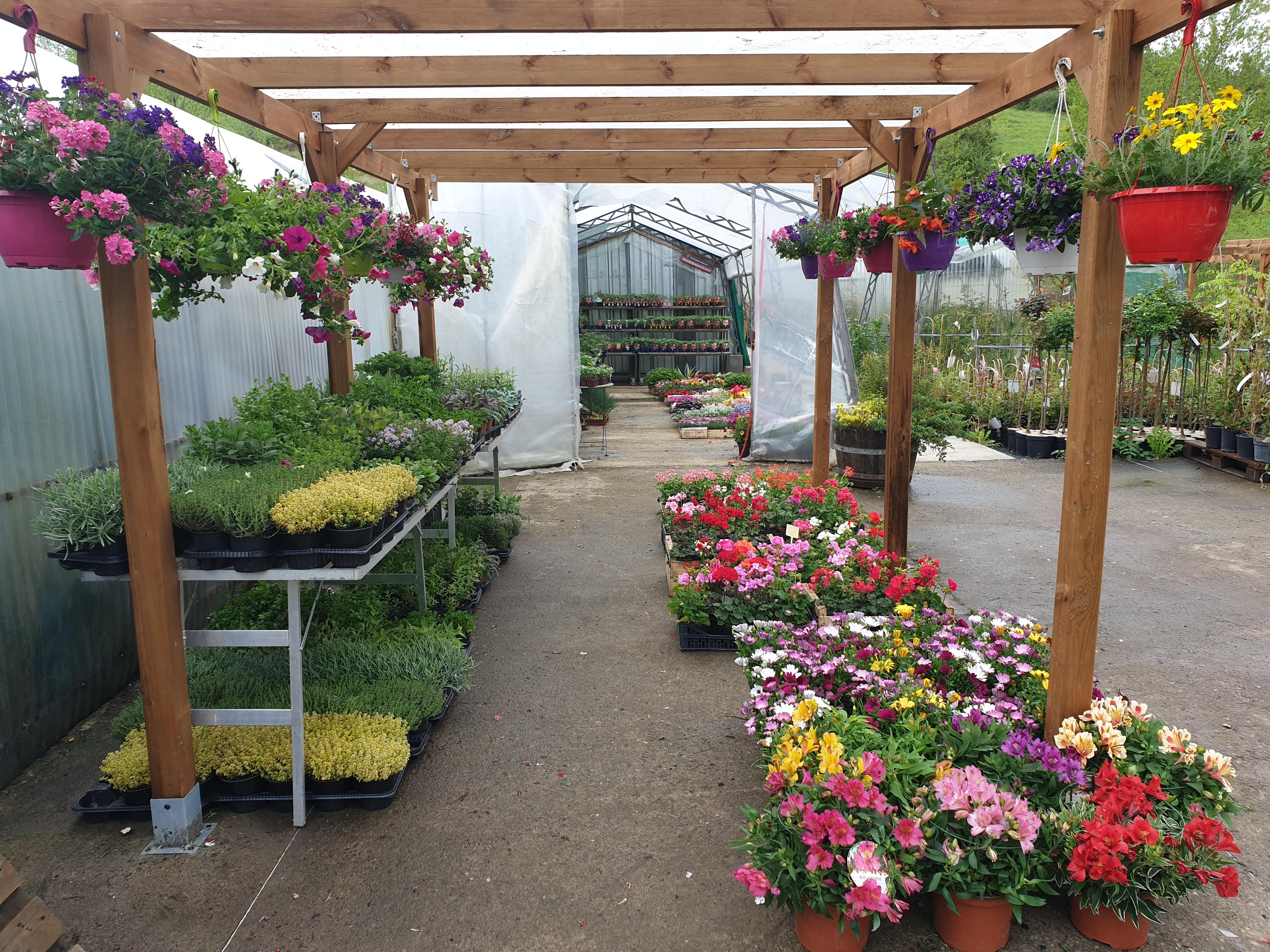 Fleurs et Aromatiques