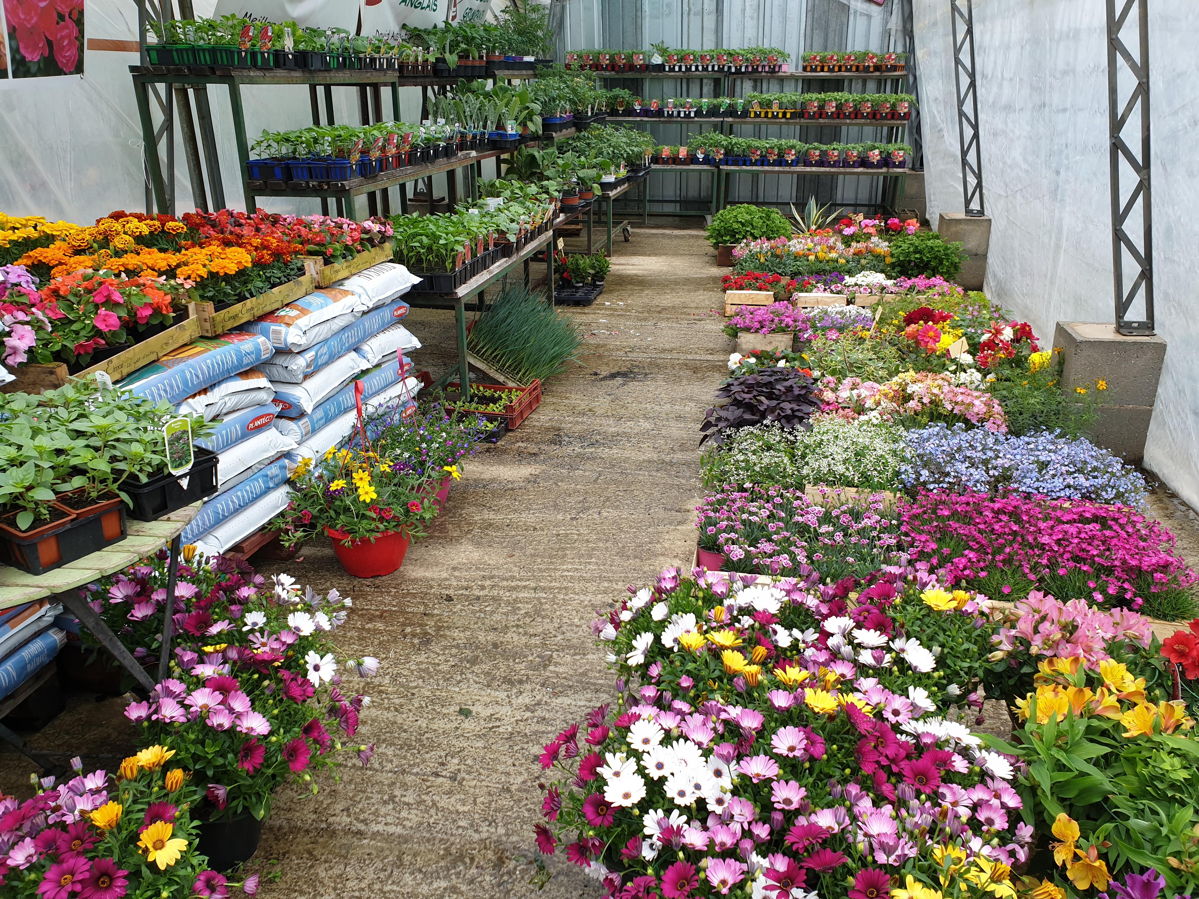 Fleurs et Plants de Légumes