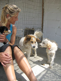 skiathos dog shelter.JPG