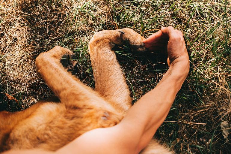 enrgy to heal hond + mens.jpg