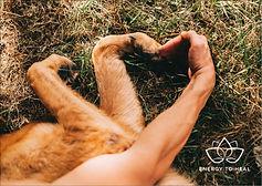 cadeaubon-Energy-healing-voor-dieren-Ams