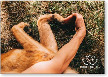 kadobon healing voor dieren amsterdam.jp