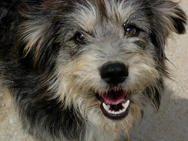 energy to heal hond.jpg