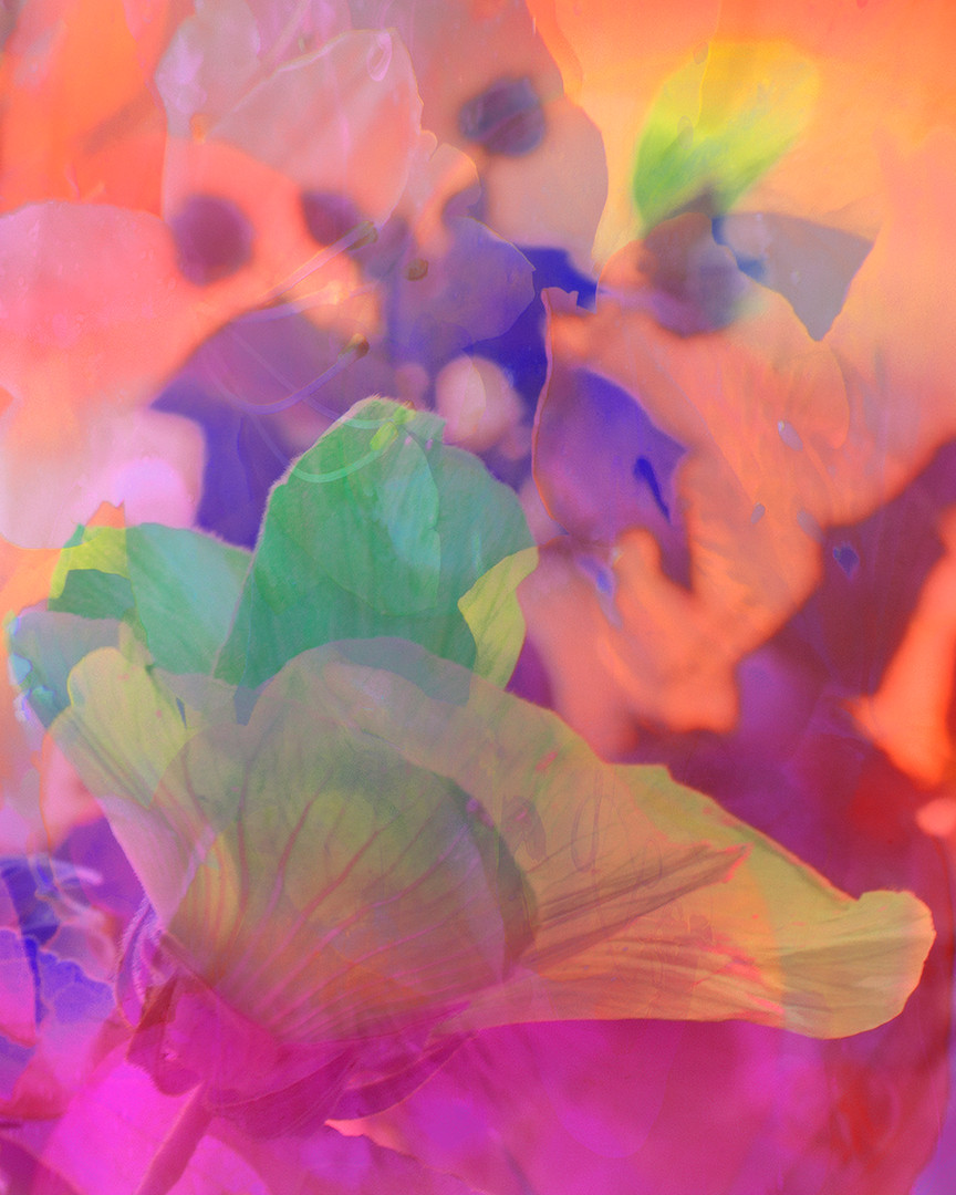 Flowers and Colors 6