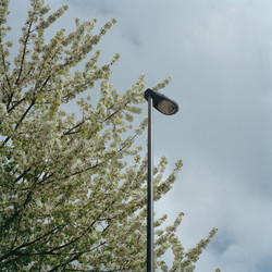 lamp blossom