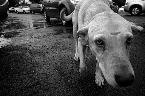 Photojournalist Lukas Maverick Greyson