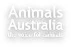 animals-australia-header.png