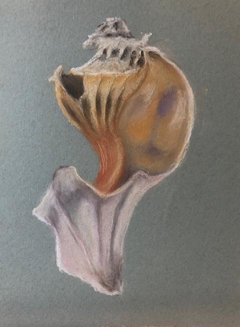 Conch Spine