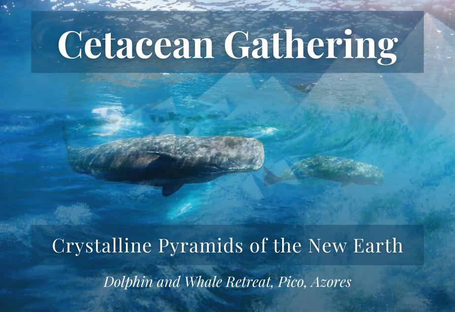 Cetacean Gathering.png