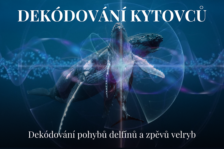 Cetacean Decoding Czech (1).png
