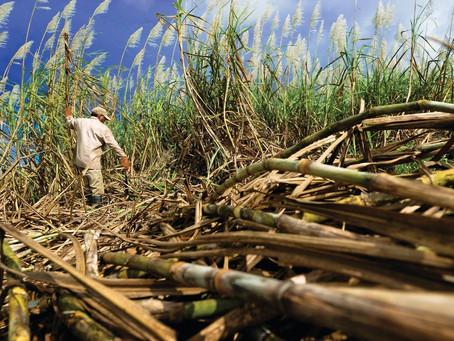 Un pas de plus pour revaloriser les retraites agricoles