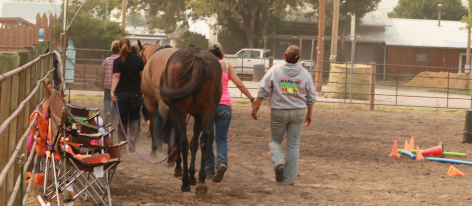 Why Horses Heal Humans