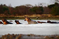Wildlife Tours.jpg
