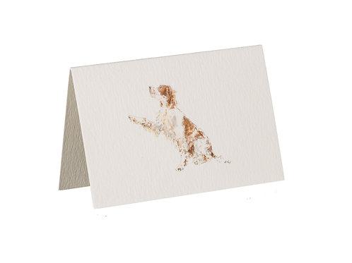 Springer Boxed Mini Gift Cards