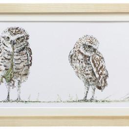 Burrow Owls Commission (Medium).jpg