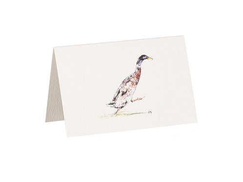 Duck Boxed Mini Gift Cards