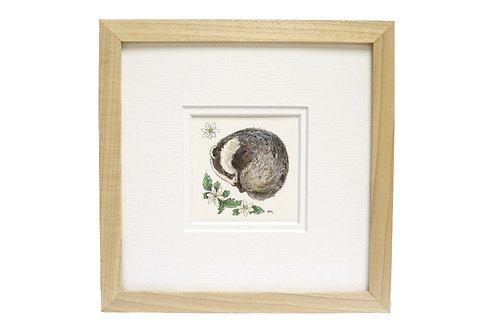 Badger and Wood Anemone Original Illustration