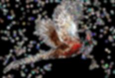 Pheasant_edited.png