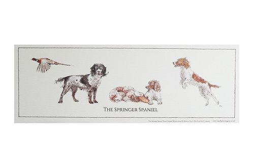 Rolled Springer Spaniel Print