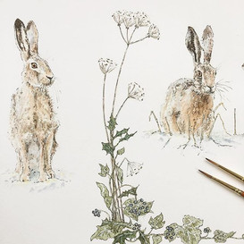 Another sneak peek at my winter hares an