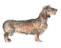 The Sausage Dog Print WM (Medium)_edited