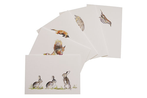 Note Cards From The Hedgerow