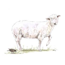 Poor Ewe