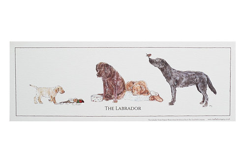 Rolled Labrador Print