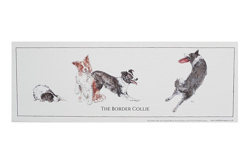 Rolled Border Collie Print