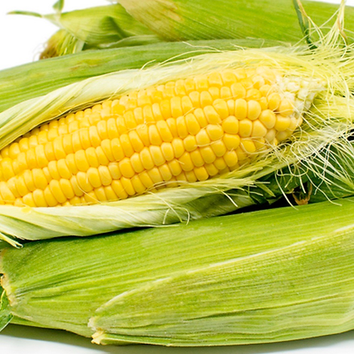 Yellow corn 1 ear