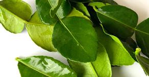 Kiefer limes leaves