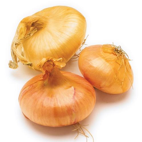 Cipollini onions 1 lb.