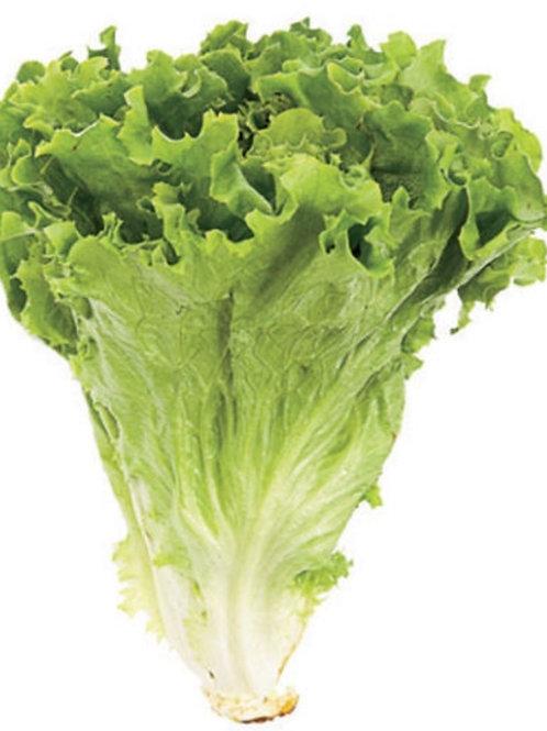 Green Leaf Lettuce 1pc